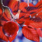 Ornamental Plum 2 by Heather Lara