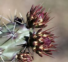 Cactus Buds by marybedy
