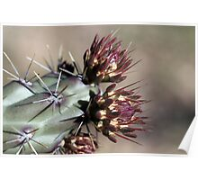 Cactus Buds Poster