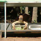 Always eat your Greens - Kangaroo by Blackie