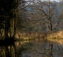 Winter at Cromford Canal  by stevepl