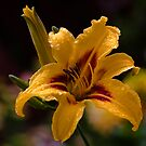 Day Lily by Ray Clarke