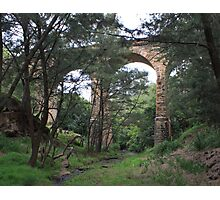 Pictons historical railway viaduct Photographic Print