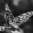 Black and White Butterfly by PhoenixArt