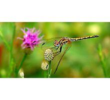 dragon wind Photographic Print