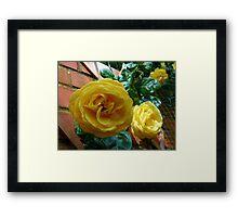 Golden Roses in June Framed Print