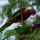 A Colourful Pair by Graham Mewburn