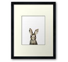 Little Rabbit Framed Print