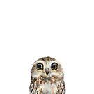 Little Owl by Amy Hamilton