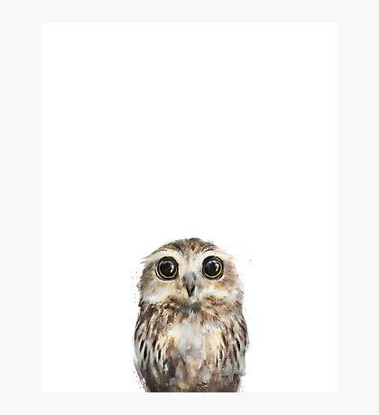Little Owl Photographic Print