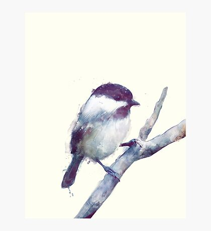 Bird // Trust Photographic Print