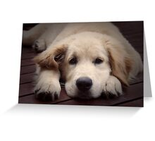 Handsome dude........ Greeting Card