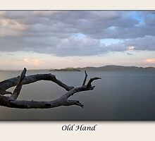 Old Hand by Michael Howard