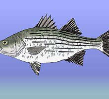 White Bass by fishfolkart