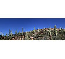 Saguaro National Park Panorama 1 Photographic Print