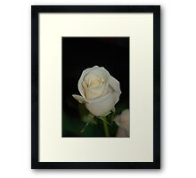 for all the redbubble ladies Framed Print