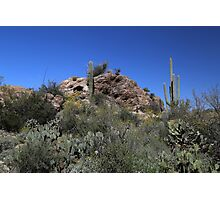 Saguaro National Park Landscape 4 Photographic Print