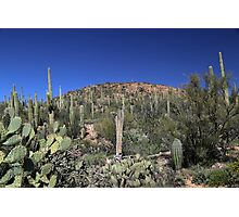 Saguaro National Park Landscape Photographic Print