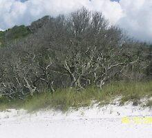 Trees on the beach by Kayte Ahrens