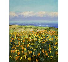 Seaside Poppies Photographic Print