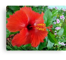 My Front Yard Hibiscus Canvas Print