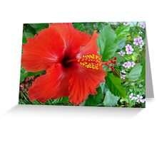 My Front Yard Hibiscus Greeting Card