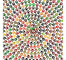 Pawprints spiral colorful Photographic Print