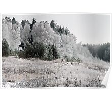 Frosted Landscape Poster