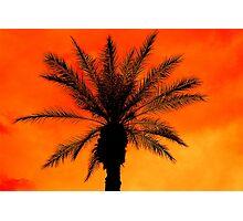 Ice Palm Photographic Print