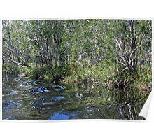 Noosa Everglades Poster