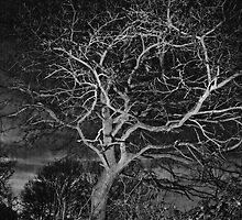 Tree at night by Angela Cooke