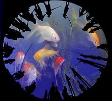 Dream Catchers by Igor Zenin