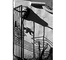 San Xavier Gate Shadow with Cactus 2 BW Photographic Print