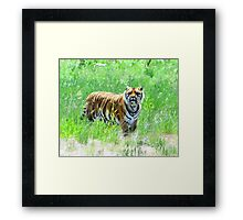 Bengal Tiger in Meadow Framed Print