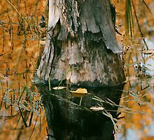 Elephant foot-on Beaver pond by Cushman