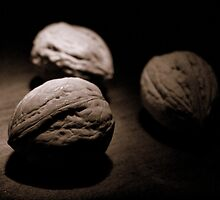 Three Walnuts in Sepia by goodieg