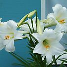 Easter Lilies by Marjorie Wallace