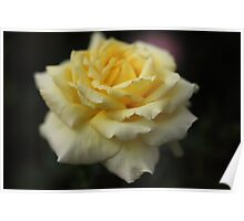 Yellow Rose Romance Poster