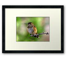 Rufous Hummingbird ~ Female Framed Print