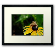 The Harbinger Framed Print