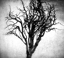 Desiccated Shrub: Black and White by goodieg