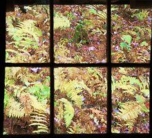 Deep Forest Ferns by Don Brogan