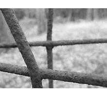 Macro Wire Photographic Print