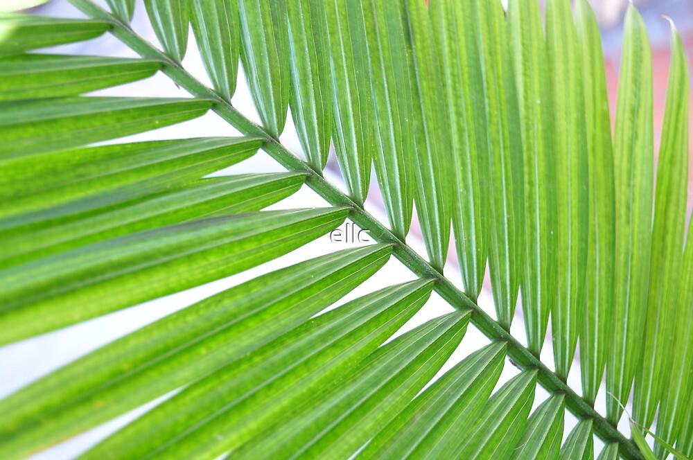 Palm Leaf by ellc