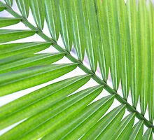 Palm Leaf by ellc