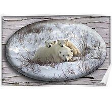 January Polar Bear Poster