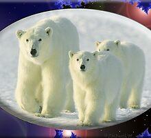 September Polar Bear by David Booth