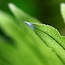 green on green by lensbaby