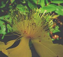 Yelow flower serie I !... by sendao