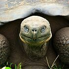 Big Guy (Galapagos Islands) by BGpix